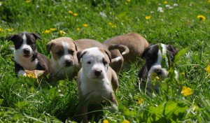 Flossy's pups