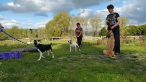 training - dogs